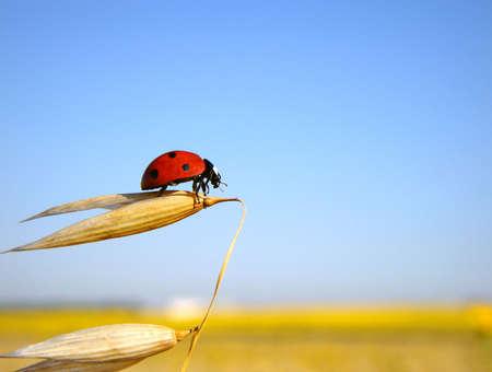 Ladybug prepares to flight photo