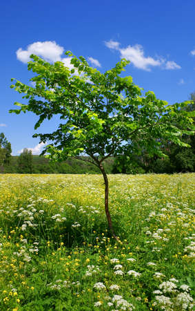 young tree on blossoming meadow Stock Photo - 10086881