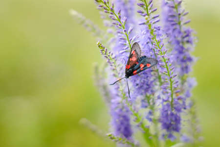 spotted flower: Black spotted butterfly on a wild flower