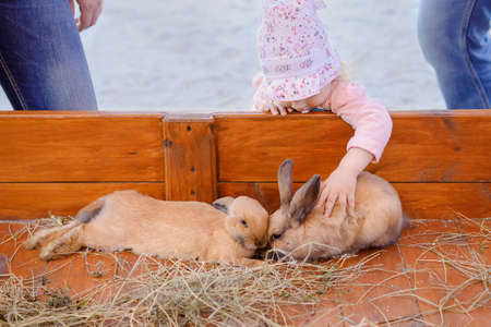 Little girl stroking brown rabbits, contact zoo, Chelyabinsk, Russia