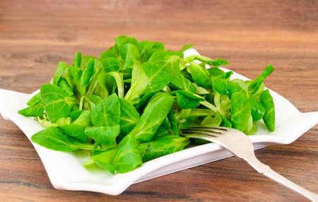 Green Fresh Salad on Plate. Studio Photo