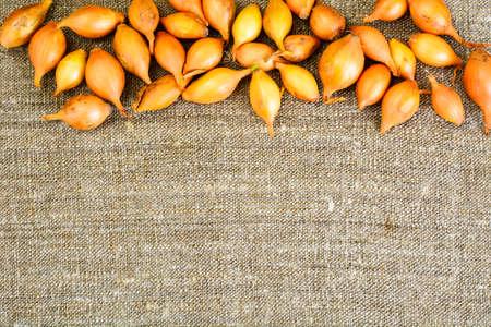 Fresh Onion on Wood Background. Studio Photo Stock Photo