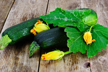 Fresh Green Zucchini with Leaves and Flowers Studio Photo Stock Photo