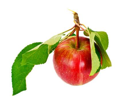Fresh Sweet Tasty Red Apple Isolated on White Background Studio Photo Stock Photo