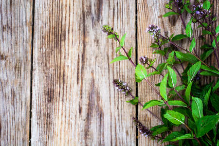 arvensis: Mint Flowers on Wooden Rustik Background Natural Photo Stock Photo