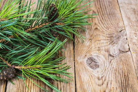 Pine branch with cones. Studio Photo Stock Photo