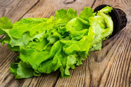 grown: Fresh lettuce, grown in a pt