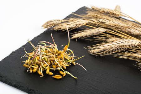 germinación: Los brotes jóvenes brotan granos de cereales