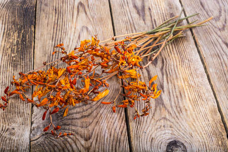 Dried flowers Crocosmia