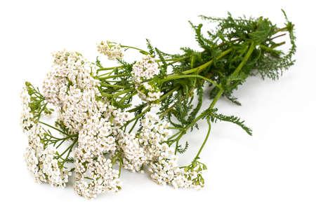 Witte duizendbladbloemen