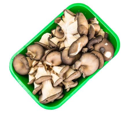 Bunch of fresh Oyster mushrooms