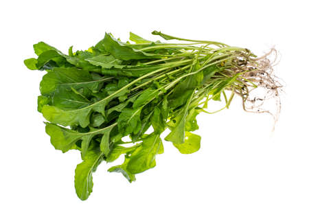 Bunch of fresh arugula with roots Stock Photo