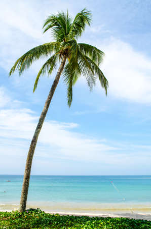 One palm tree on the shore Banque d'images