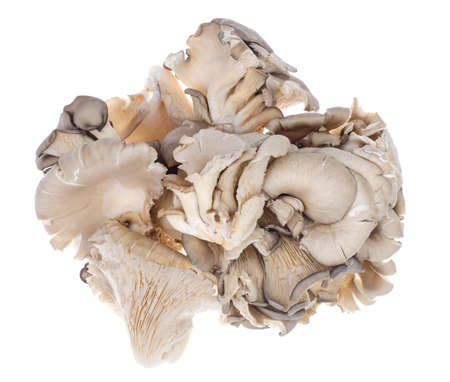 Bunch of mushrooms isolated on white background