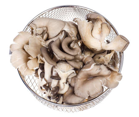 Washed oyster mushrooms