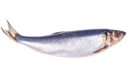 Herring salted, isolated on white background