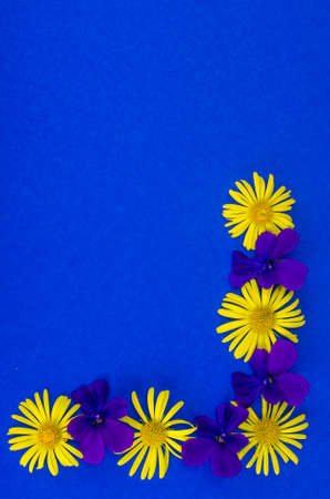 Postcard, card, creative layout of flowers on colored background with space for text. Studio Photo 版權商用圖片