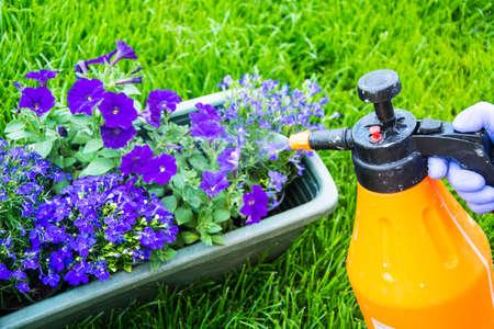 Tratamiento de flores de jardín de plagas y enfermedades.