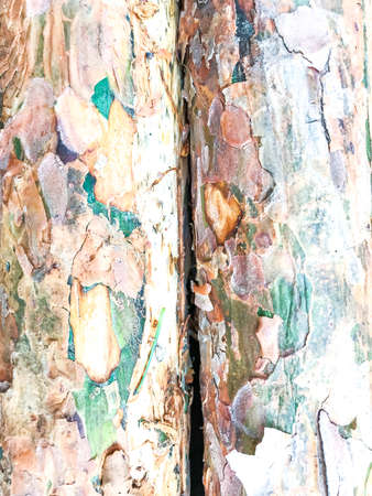 Trunk of tree in forest with damaged bark Stock Photo