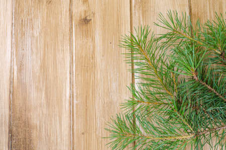 Spruce branches, pine trees on wooden background for Christmas mockup. Studio Photo