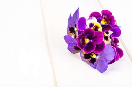Little bouquet of Viola tricolor. Studio Photo