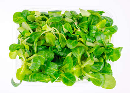 Fresh corn salad leaves fresh in container. Stockfoto