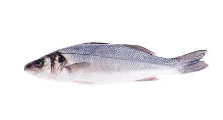 Fish carcass Dicentrarchus labrax on white. Studio Photo