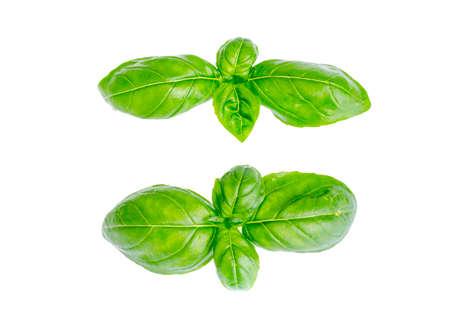 Basil leaves isolated on white background. Photo Stock Photo