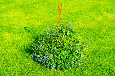 Suspended pots with flowers on background of green grass.
