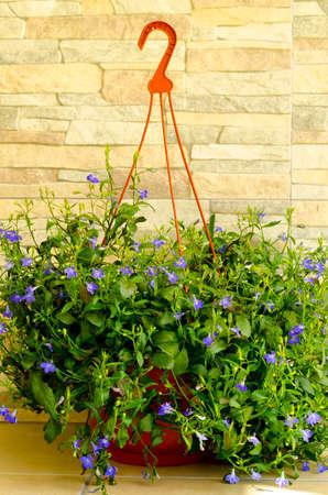 Blue flowers of lobelia on decorative stone background. Stock Photo