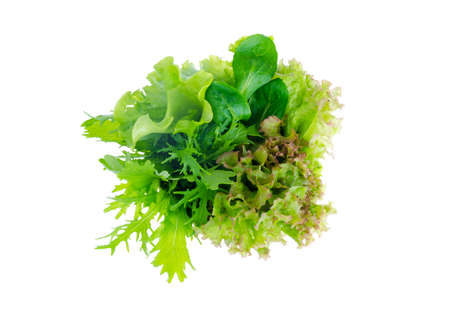 Green salad leafs. Lettuce isolated on white background.