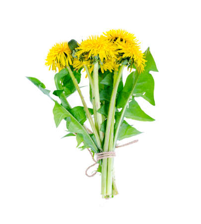 Small bunch of blooming yellow dandelions. Photo Stock Photo