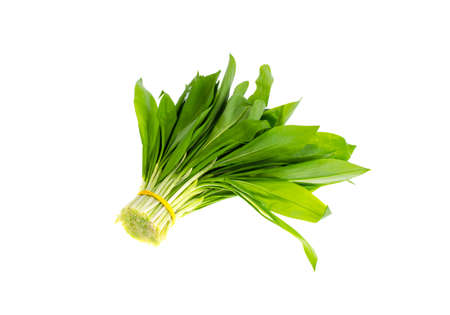 Baunch of fresh green Allium ursinum. Studio Photo