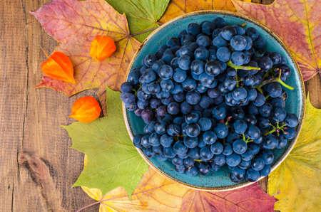 Ripe blue grapes, autumn concept, harvesting