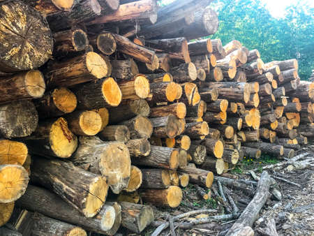 Various size cut tree trunks logs body firewood stack in forest. Deforestation area. Woodpile of chopped lumber. Zdjęcie Seryjne