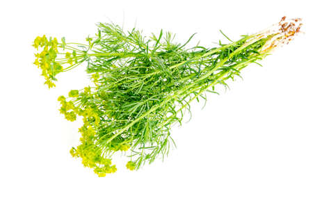 Medicinal plants, herbs isolated on white background. Imagens