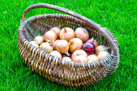 Woven vintage basket with onion heads
