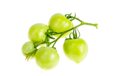 Unripe green tomatoes on branch isolated on white. Studio Photo Stock Photo