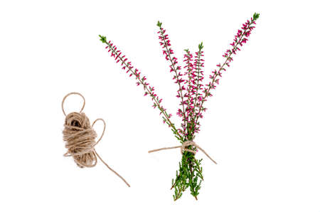 Blooming pink heather branches on white background. Studio Photo