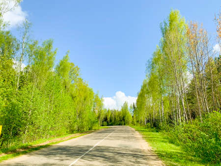 Road between trees with green leaves on sunny day. Studio Photo