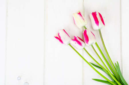 Fresh garden multicolored tulips on white wooden table. Studio Photo