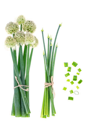 Fresh cut green onion arrows isolated on white. Studio Photo