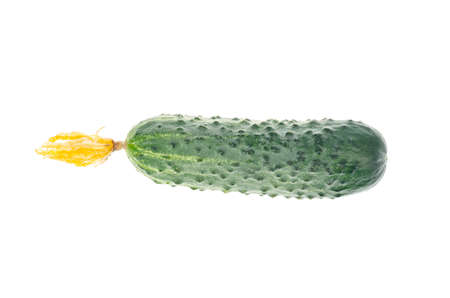 Fresh green cucumber with dried flower isolated on white background. Studio Photo Archivio Fotografico