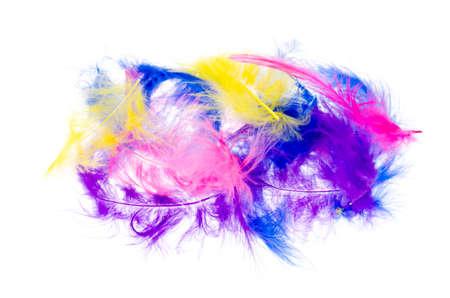 Decorative multi-colored feathers isolated on white background. Studio Photo
