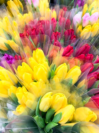 Luxurious bouquets of multi-colored tulips. Spring flowers. Gifts Stockfoto