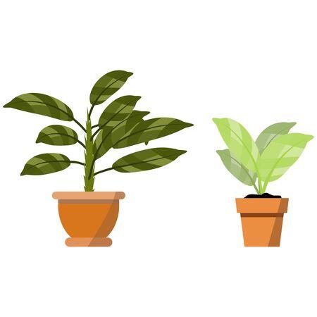 Plantas en macetas aisladas en blanco. Vector conjunto de dos plantas tropicales verdes en maceta ilustración para accesorios de interior y dibujos animados