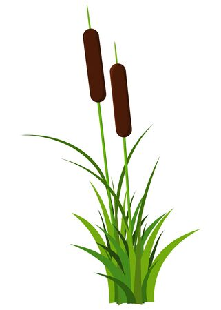 Couple reed stem with leaves plant vector isolated on white background. Good for cartoon props or landscape decoration