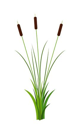Bunch of three long reed stems with leaves plant with grass vector isolated on white background. Cartoon decoration or props landscape