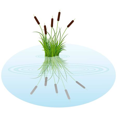 Vector bush reeds on the water. Reeds reflected in the lake water with rounds Ilustración de vector