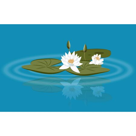 Water lily vector on the lake with leavs and flower buds Ilustração
